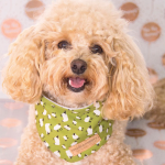 'Dolly' bandana by Ollie & Penny