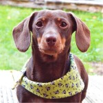 'Winifred' Halloween bandana by Ollie & Penny